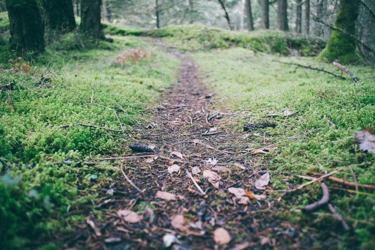 chaussures trail terrain peu accidenté
